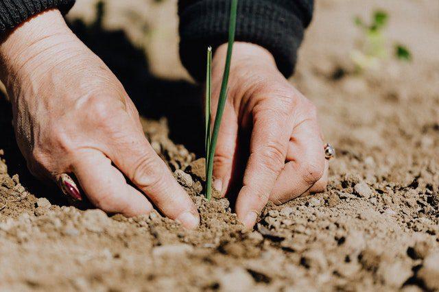 Agronomy 1