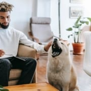 Animal assisted therapy courses