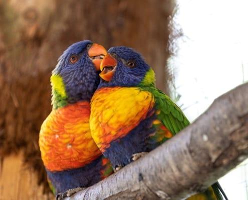 Birds colourful