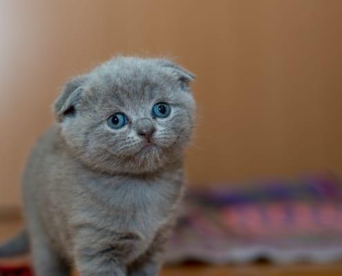 Cat astrophies blog image