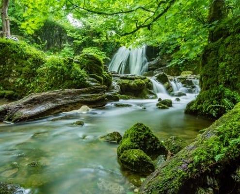 Cert Nature Park Management blog small size