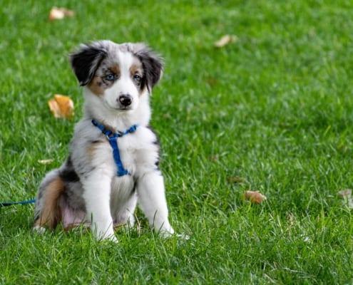 Cert of Dog Psychology and Training blo
