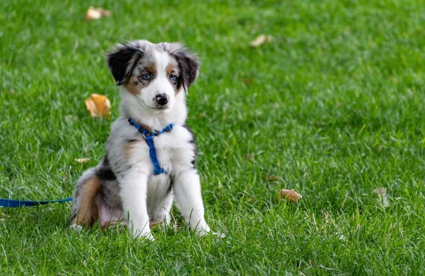 Cert of Dog Psychology and Training blo scaled