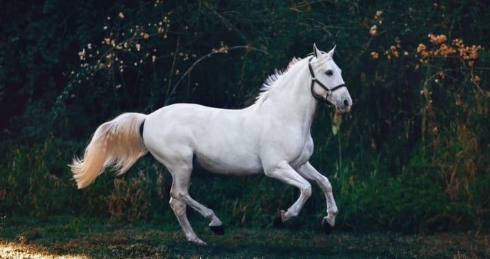 Cert of Equine Behaviour blog