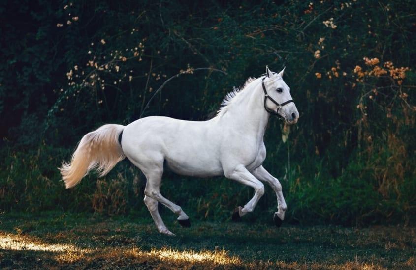 Cert of Equine Behaviour blog scaled