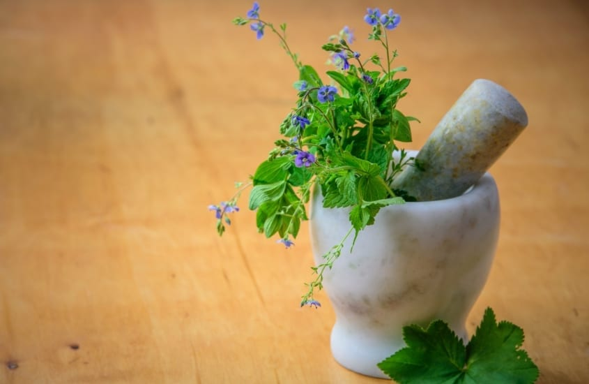 Cert of Herbal Medicine Blog