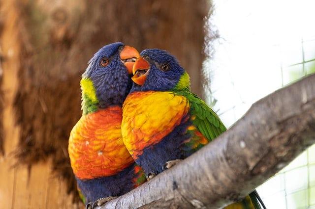 Cert of Ornithology