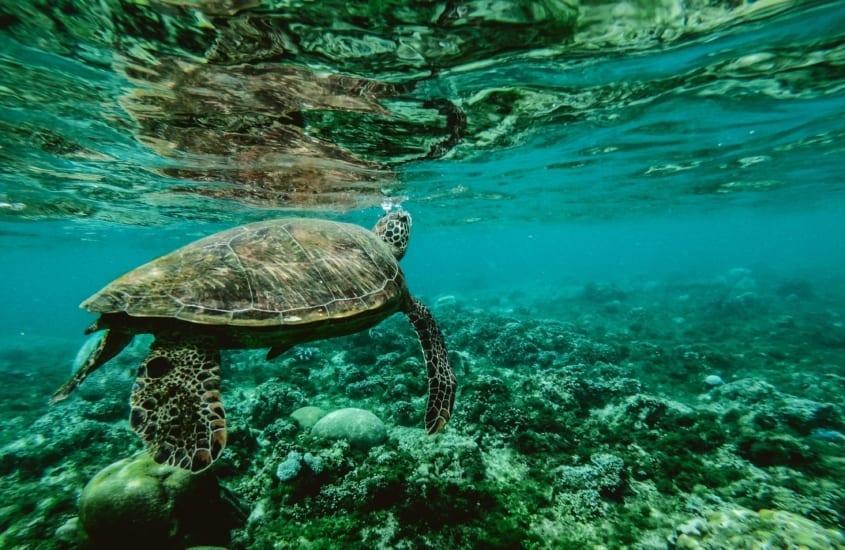 Cert of Wildlife Conservation blog scaled