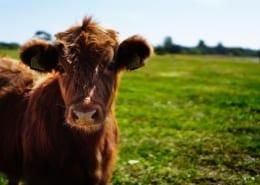 Farm management scaled