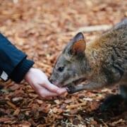 Online biology course marsupials