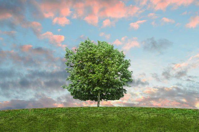 Tree rehabilitation course