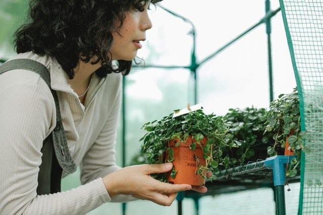 Woman holding a plant nursery sales