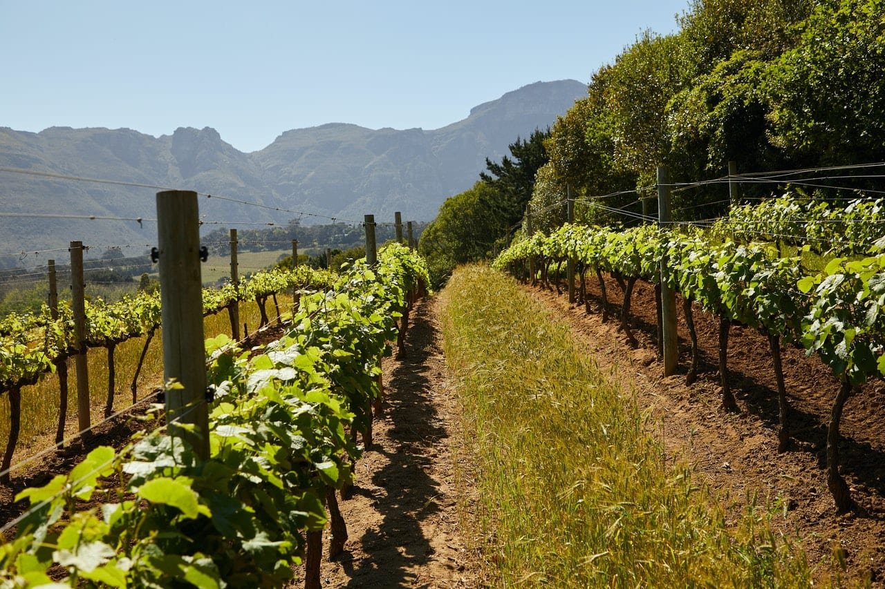 Advanced Certificate of Viticulture & Winemaking (Oenology)
