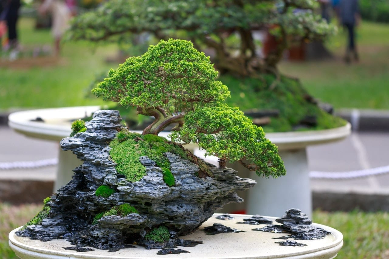 Bonsai Trees for Beginners