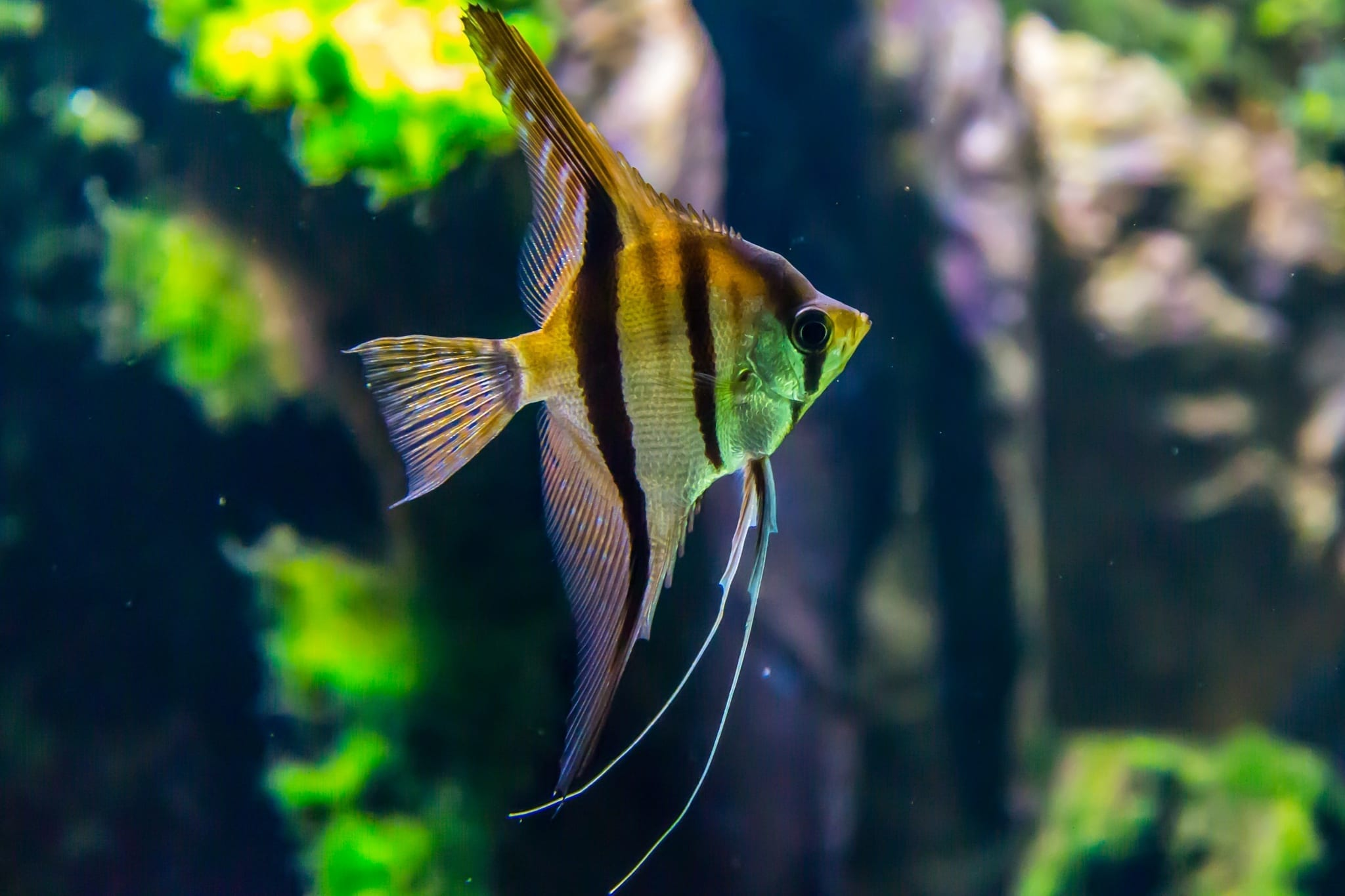 Certificate of Aquarium Management