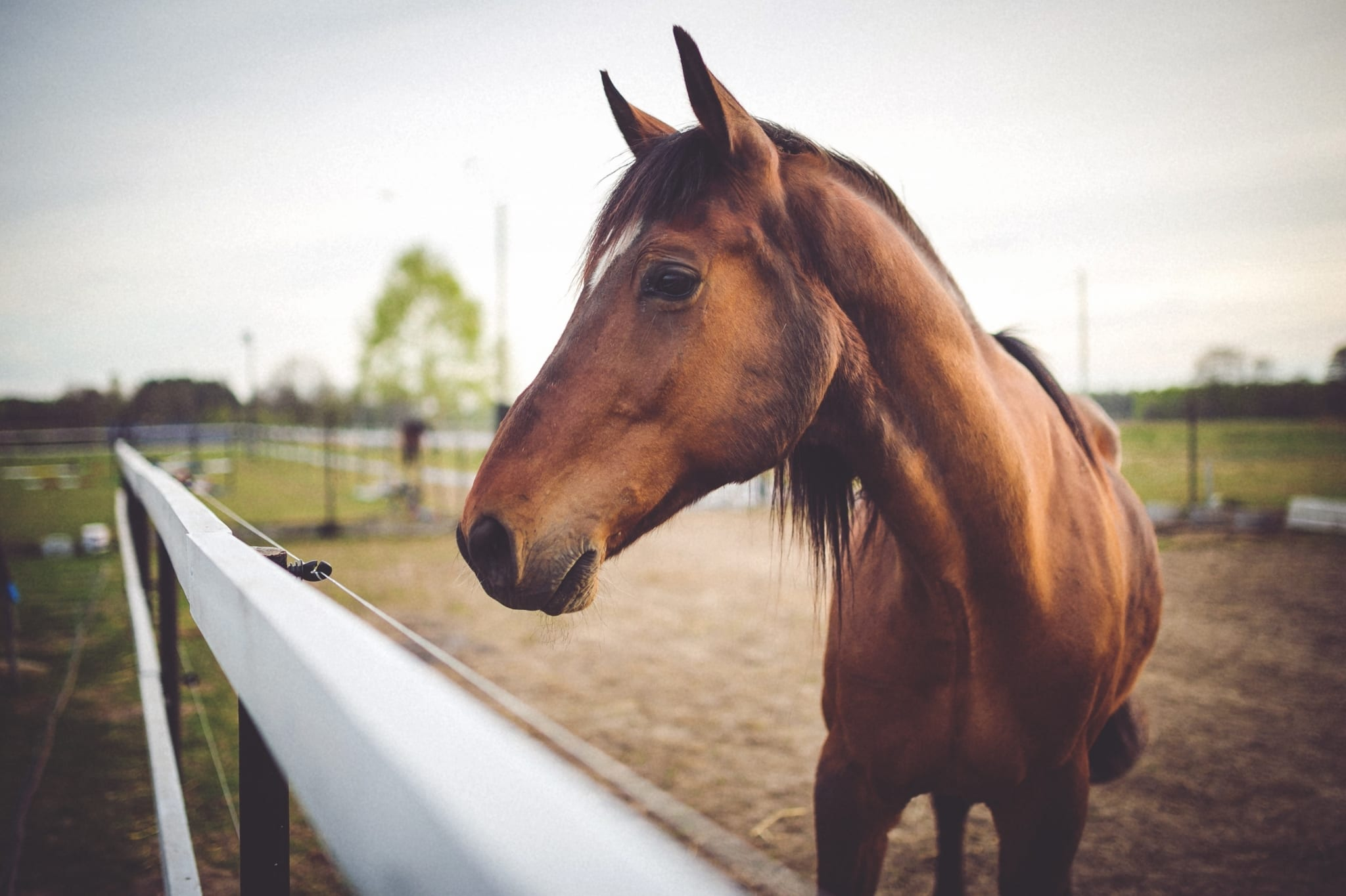 Certificate of Horse Care (Advanced Program)