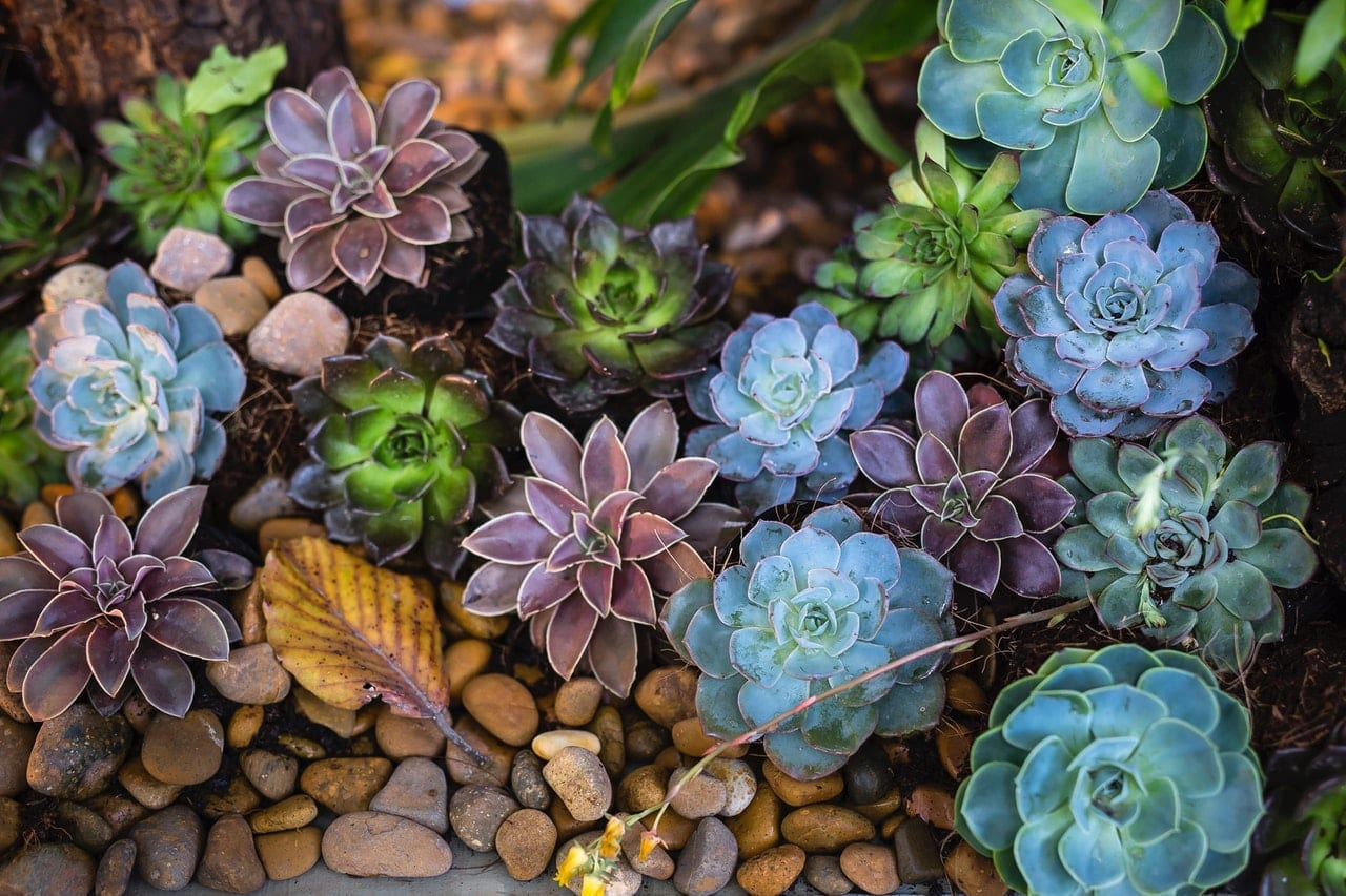 Growing Succulents & Cacti Gardens