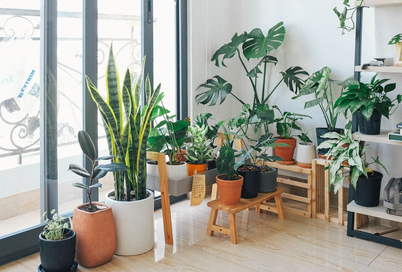 Introduction to Indoor Plants