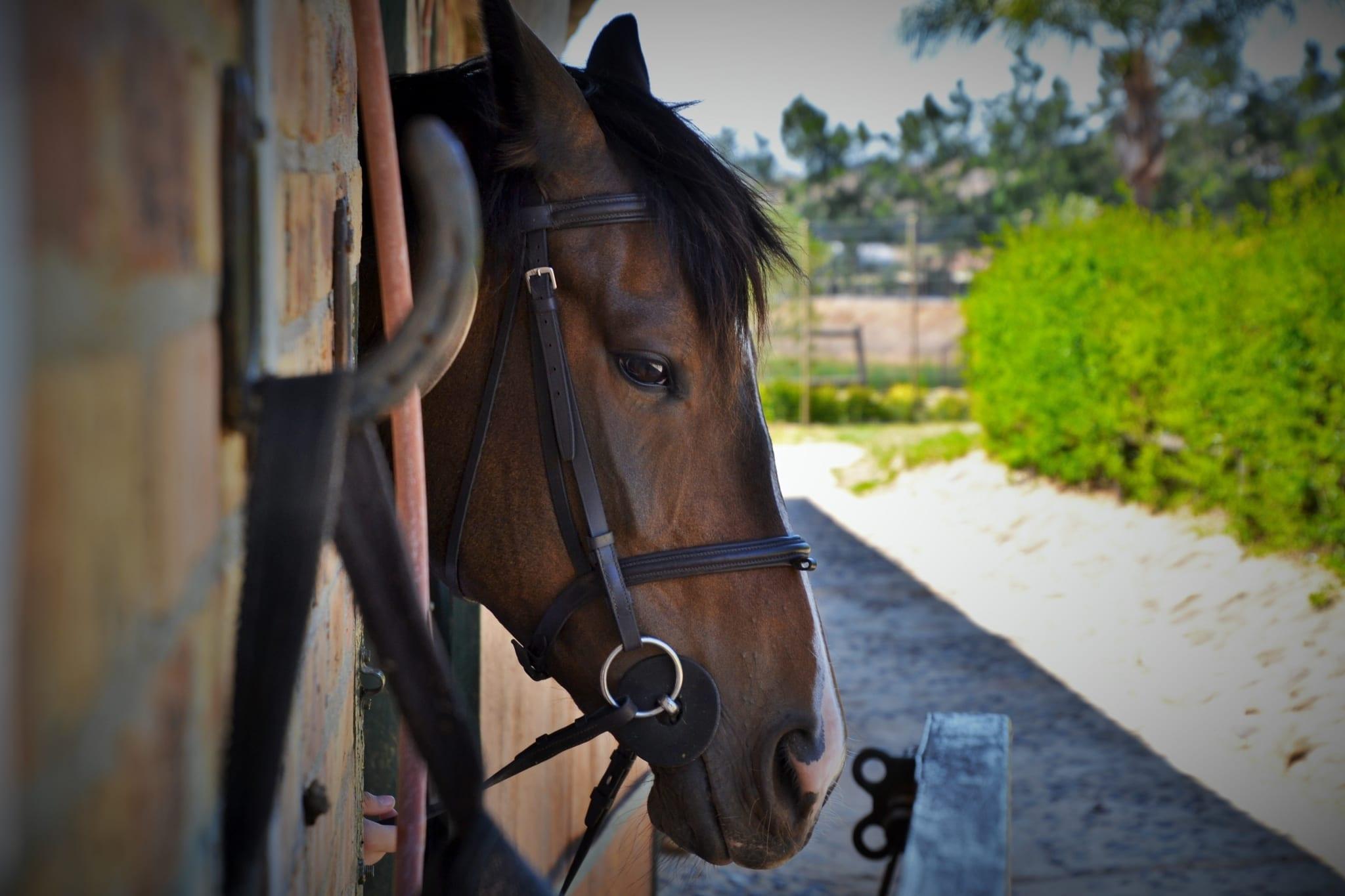 Certificate of Horse Care (Intermediate Program)
