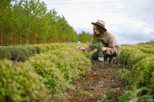study agronomy online course