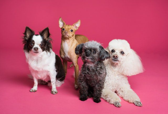 study dog grooming courses