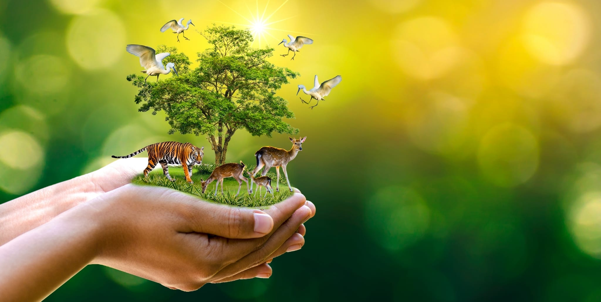 Certificate of Wildlife Conservation